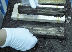 madera inmune a las termitas